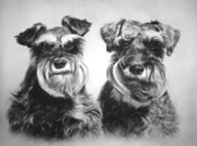 Two puppies. Pencil.